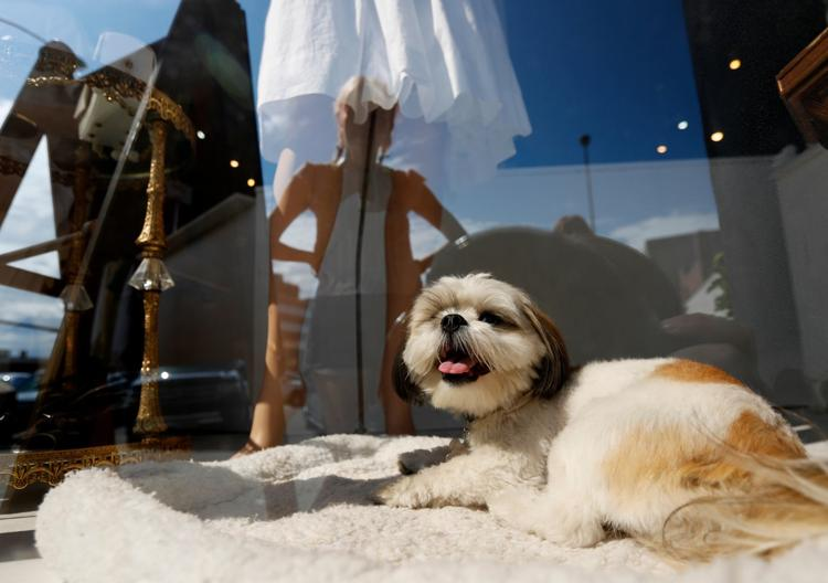 Dog-Friendly Downtown Billings